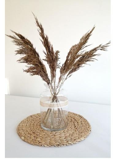 Kuru Çiçek Deposu Kuru Çiçek Pampas Küçük 7'li Demet 50 Cm (Kahverengi) Kahve